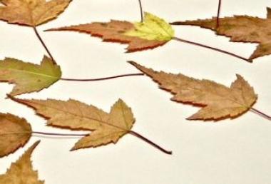 Afbeeldingsresultaat voor gedroogde herfstbladeren